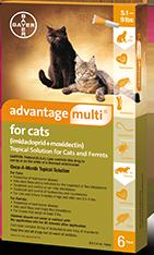 advantage_cat