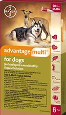 advantage_dog